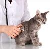 Ветеринарные клиники в Бураево